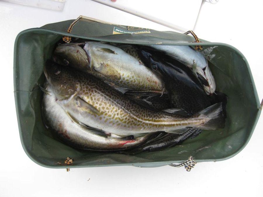 volle Fischkiste