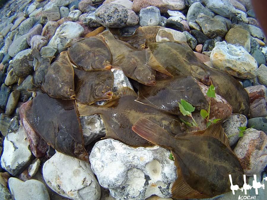 erbeutete-Plattfische